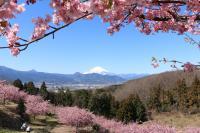 おおい ゆめ の 里 おおいゆめの里 - 神奈川県大井町ホームページ